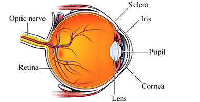 What is Uveitis?