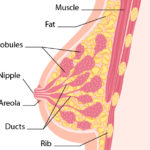 things you may not know about breast cancer